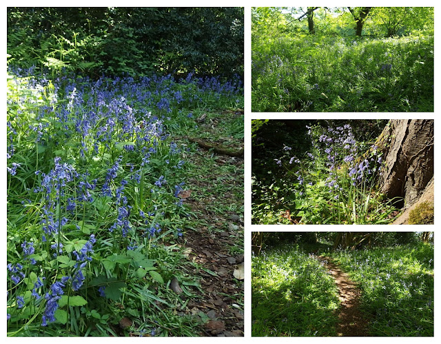 Birds Marsh Wood and bluebells