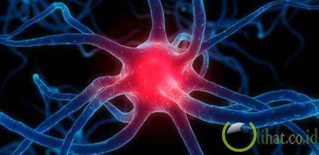 Sel otak tak dapat beregenerasi