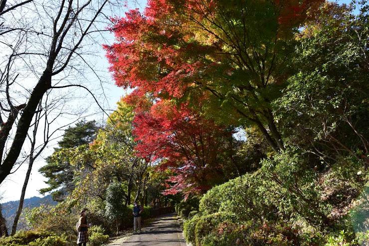 城峰公園の紅葉4