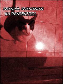 Foto meme kucing lucu