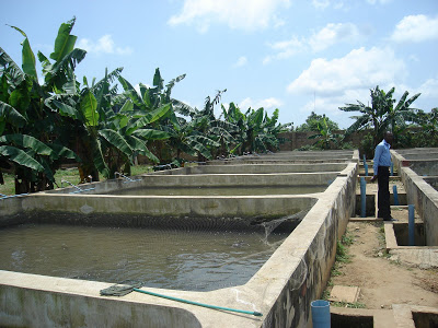06tvAfrican-catfish-1 Have you heard about fish farming?  Important Factors To Consider When Going Into Fish Farming