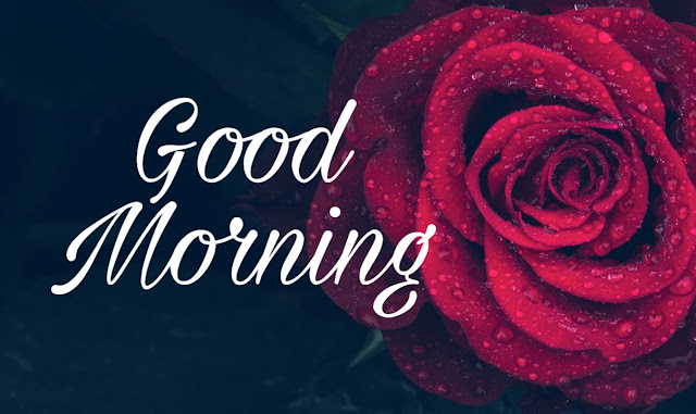 Good Morning Red Rose Flowers Pics Images Pictures Download