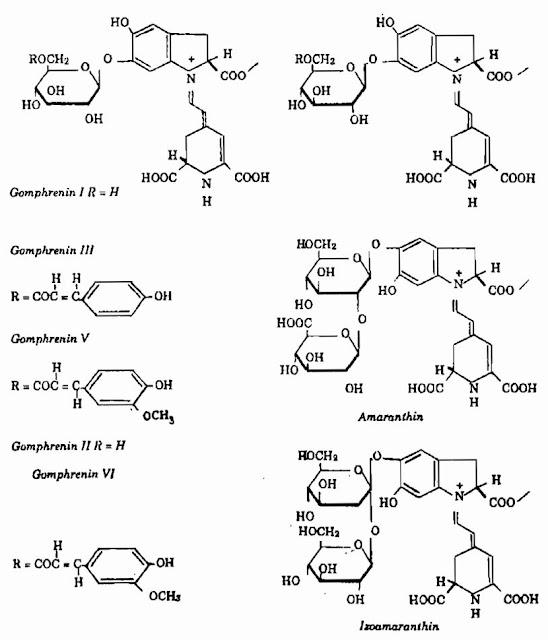 Thành phần hóa học Cây Cúc Bách Nhật - Gomphrena globosa - Nguyên liệu làm thuốc Chữa Cảm Sốt