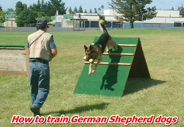 How to train German Shepherd dogs