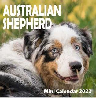Calendrier Berger Australien 2021, Aussie Calendar, Australian Shepherd Calendar