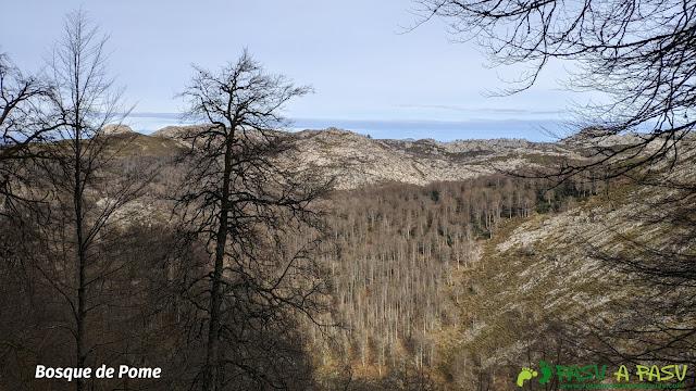 Vista del Bosque de Pome desde el Camín de la Madera