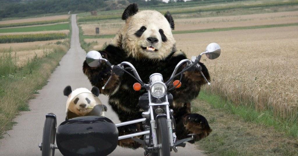 Wallpapers Funny Panda Wallpapers