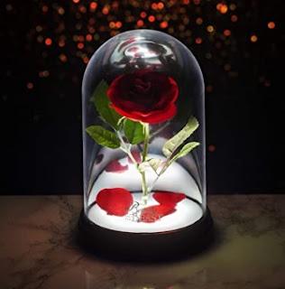rosa incantata