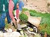 Uchumayo: Ecología en peligro