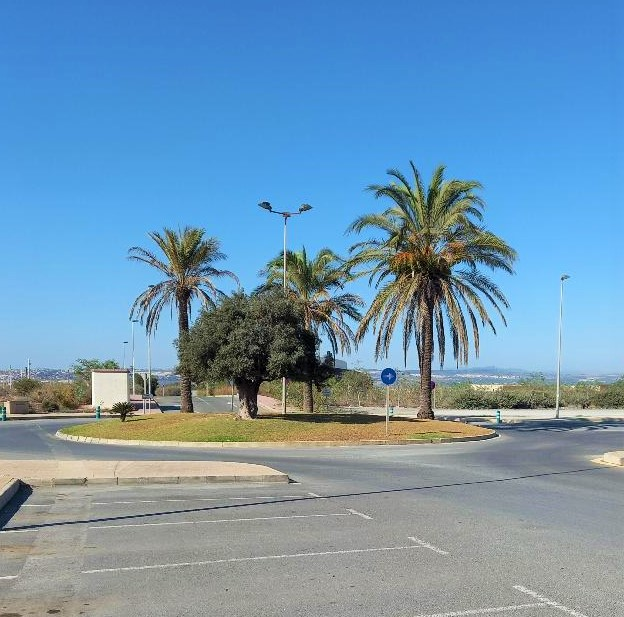 palm trees on roundabout Quiron hospital carpark Torrevieja