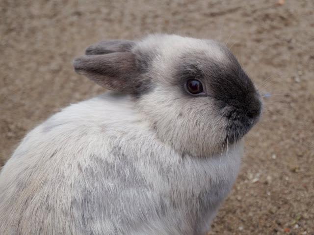 Frühling im Tierpark Gettorf (+ Verlosung). Es gibt Kaninchen im Tierpark und in den Osterferien tolle Aktionen!
