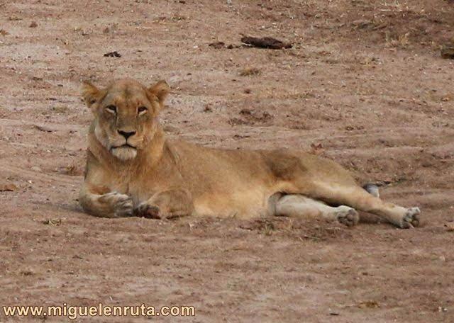 León-Satara-Kruger