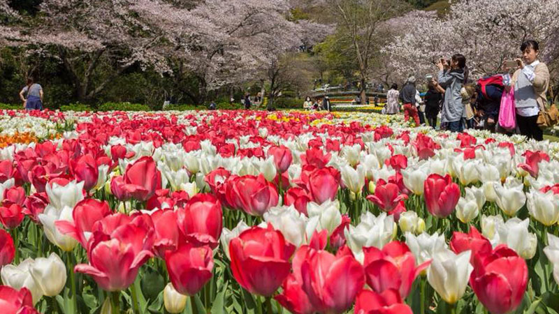 Share Experience Tour to Japan