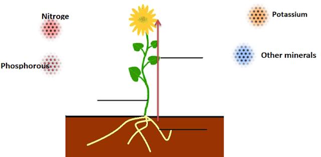 Nutrients in Plants, nutrition in plants, www.educationphile.com