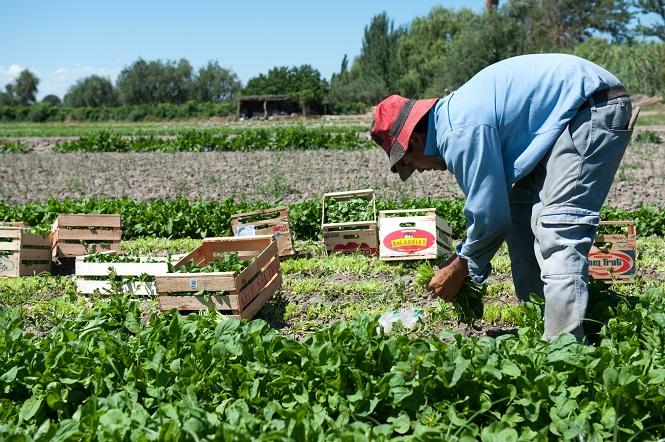 Mendoza Activa: un estímulo concreto para la reactivación
