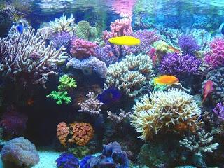 Todo sobre los Corales de mar