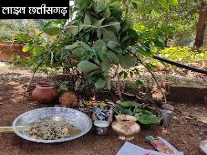 एक अनोखा पर्व | छत्तीसगढ़ प्रदेश भर में मनाया गया अक्षय तृतीया का त्यौहार | मध्य प्रदेश छत्तीसगढ़ न्यूज़ लाइव Live news chhattisgarh akshaya tritiya
