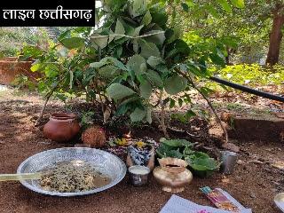 छत्तीसगढ़ न्यूज़ लाइव,cg news live in hindi