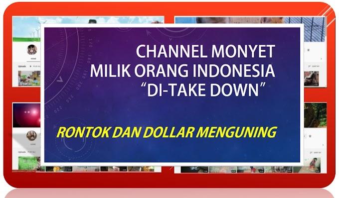 Channel Baby Monkey Indonesia Setelah Prahara Melanda