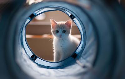 bhigi-billi-cat-walls-soooo-cuteee