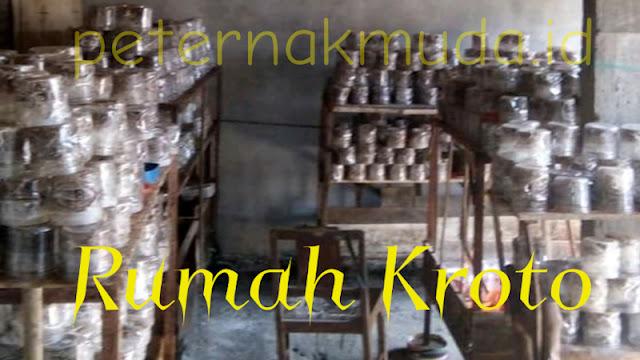 Budidaya Semut Jutawan