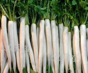 Long Radishes, Daikon Mooli variety