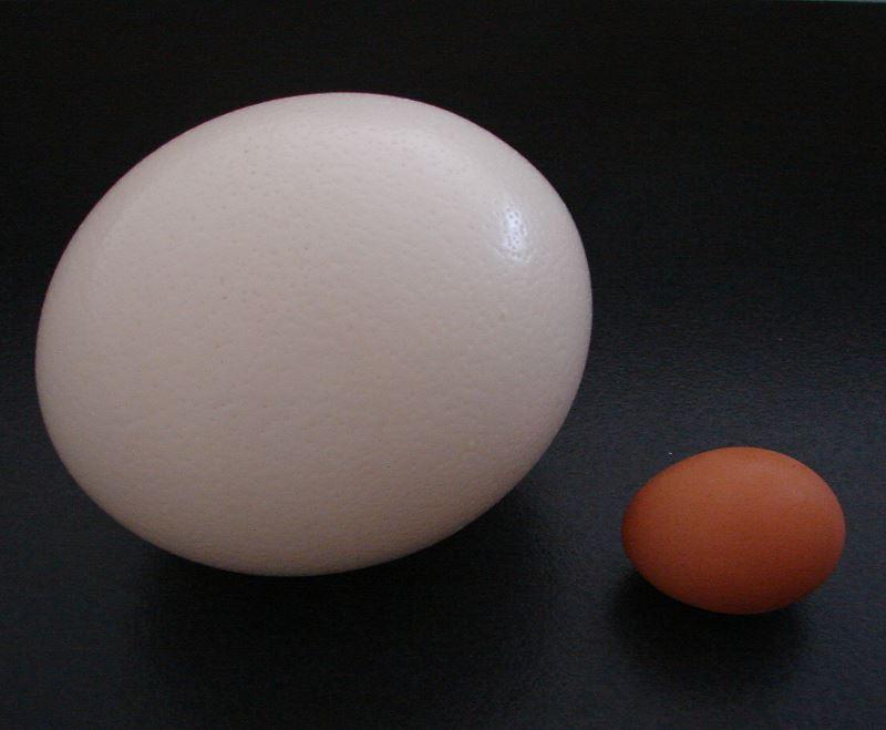 Egg Visual Guide   Epicurious.com   Epicurious.com  Ostrich Egg Size Compared To Chicken Egg