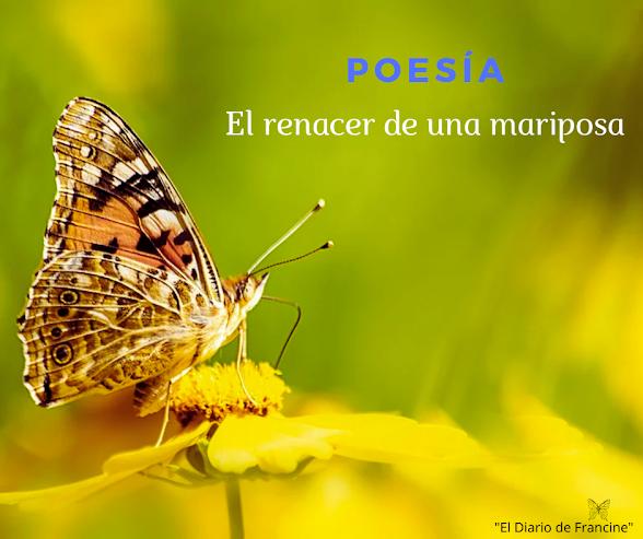 El renacer de una mariposa.