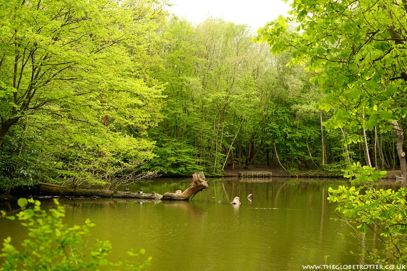 Woodlands Lake in Forty Hall Estate