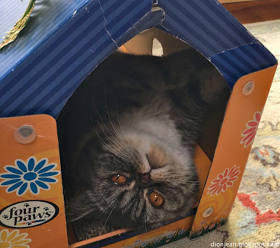 Popoki the cat upside down in her cat house