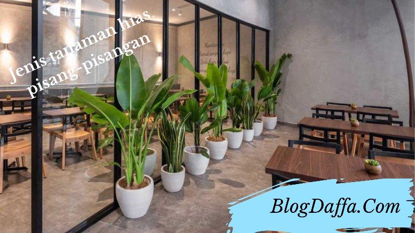Jenis-jenis tanaman hias pisang-pisangan