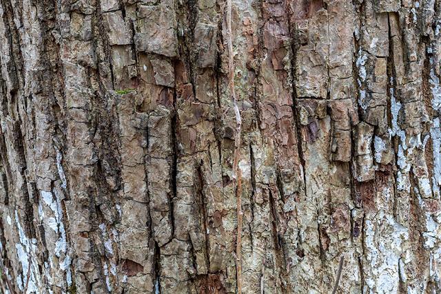 Free Tree Bark Textures Vol 3 - 3