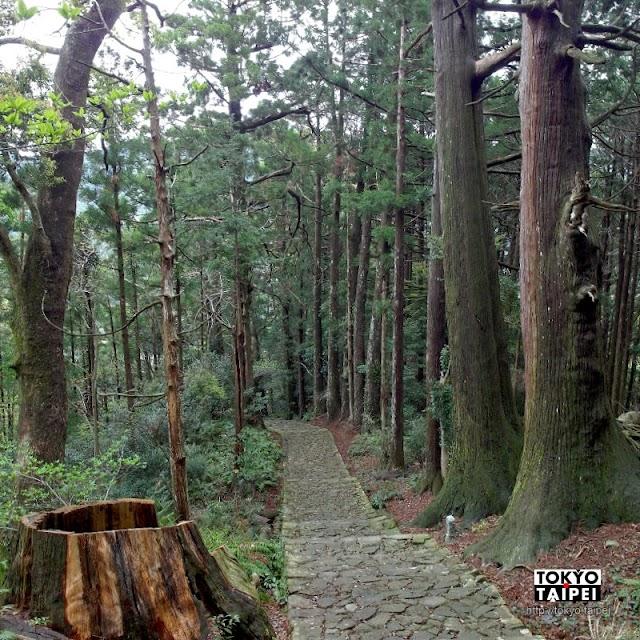 【大門坂】漫步世界遺產熊野古道 踩著高聳杉樹下的石板路登上那智山朝聖