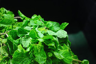 peppermint-www.healthnote25.com
