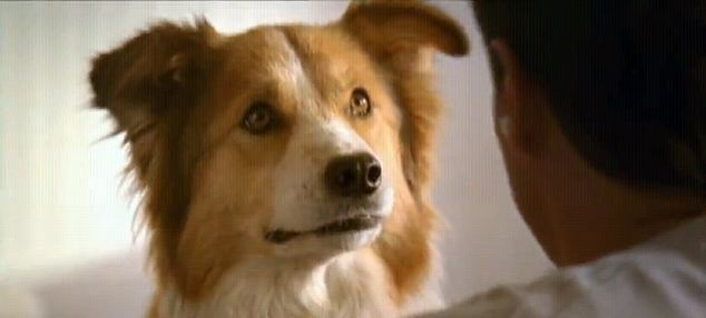 Dailyanimalfwd The Tv Advert That Talks To Your Dog Pet Food