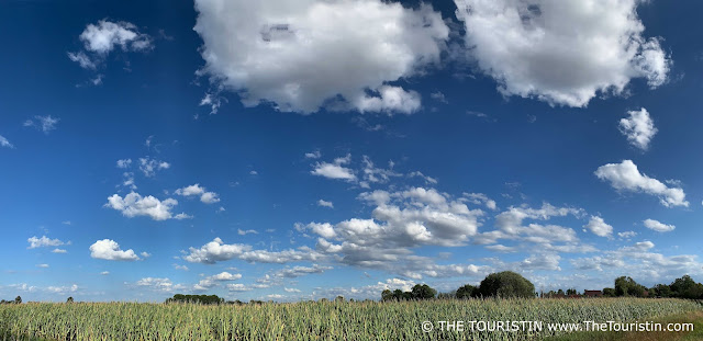 A bright blue sky with huge fluffy white clouds over a maize field.