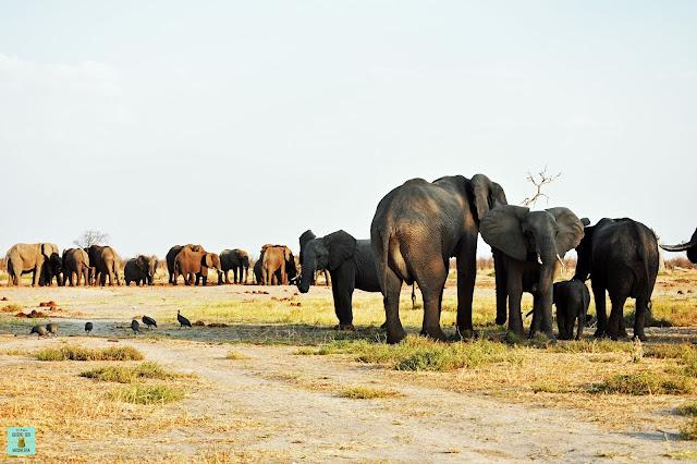 Elefantes en Savuti, Botswana