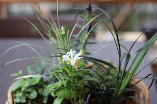 教室の教材の野の花、山の花、グラス類