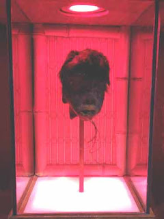 A Shrunken Head At Ripley's Curious Creatures.