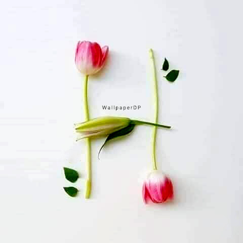 Real flower Unique A to Z Alphabet dp pics for Whatsapp ...
