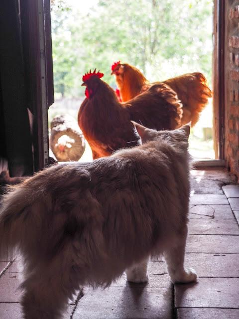 Boule Mich'versus kippen