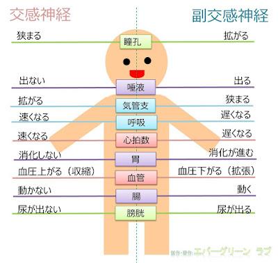 CPAP, ライフスタイル, 飲酒, 交感神経, 高血症, 自律神経, 食欲, 心筋梗塞, 睡眠障害, 朝食, 動脈硬化, 脳卒中, 副交感神経, 便秘, 朝食抜き