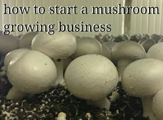 how to start a mushroom business at home