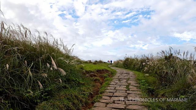 taiwan grassland