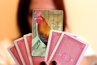foto de gallo de pelea