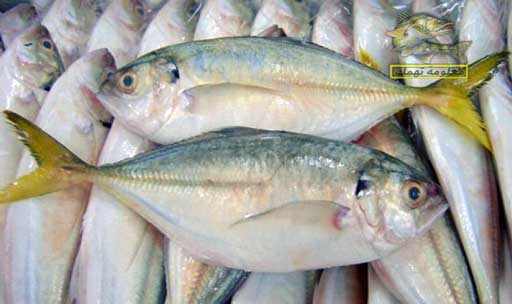سمك الميرا