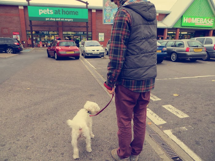 christmas shopping for dogs
