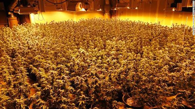 1,400 marijuana plants inside a building in Northern California
