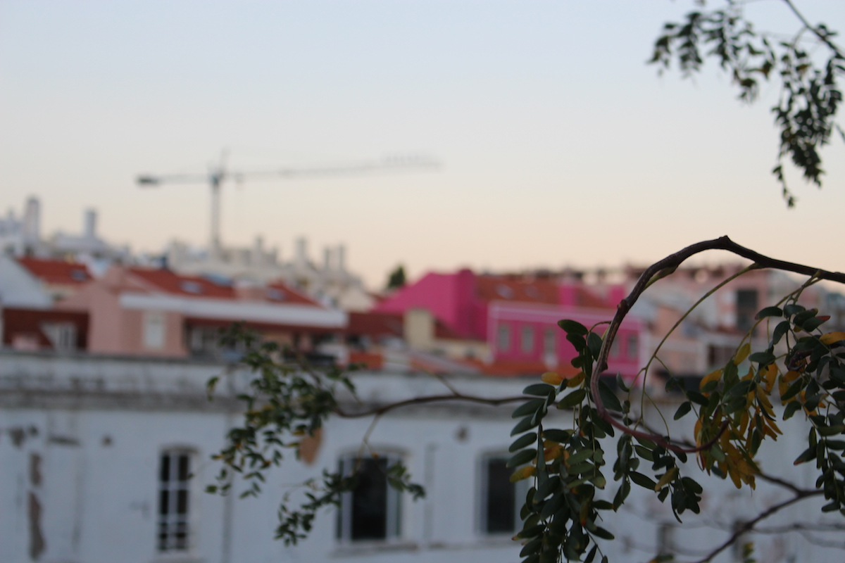 This photo as taken in Lisbon and it shows tree branches in clear view, with the tops of colorful houses in the background.