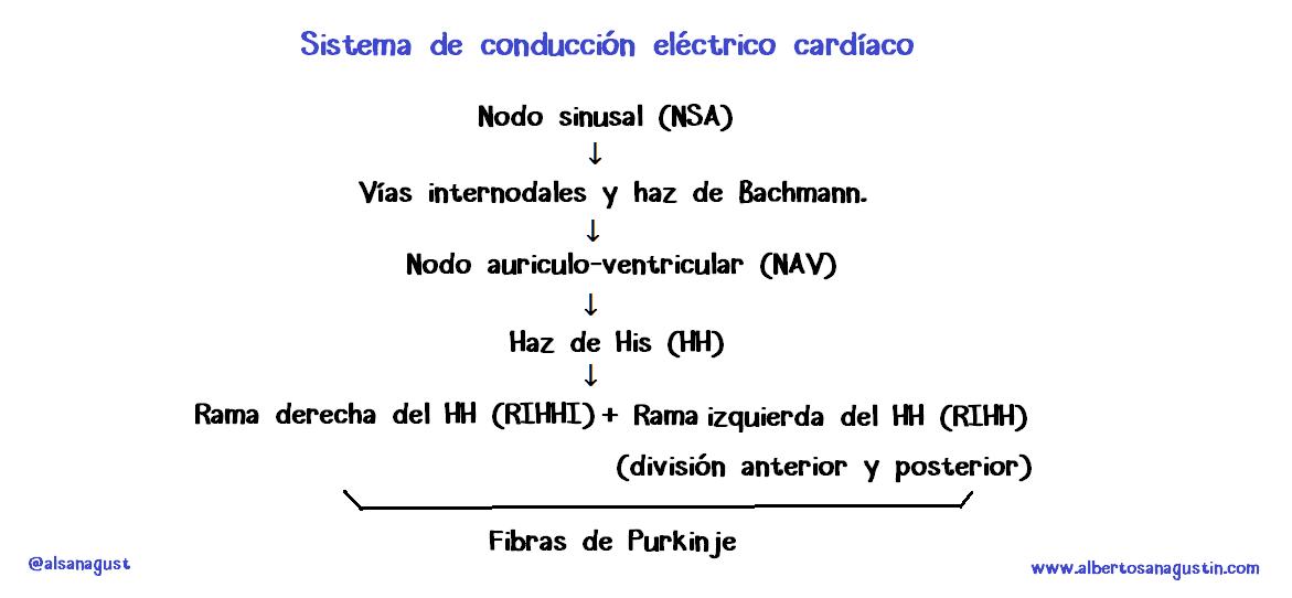 Dr. Alberto Sanagustín : Sistema de conducción eléctrica cardíaca